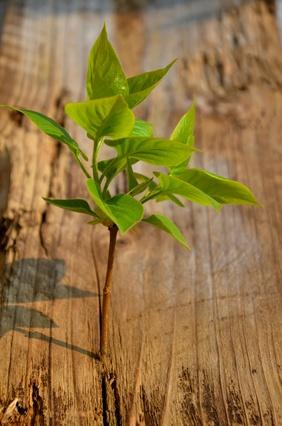 Nachhaltigkeit durch Massivholzmöbel